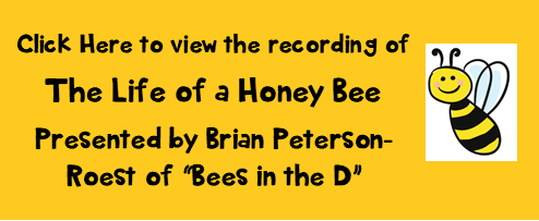 Life of a Honey Bee Presentation.png